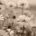 garden-resolution-de-lecran-640x480
